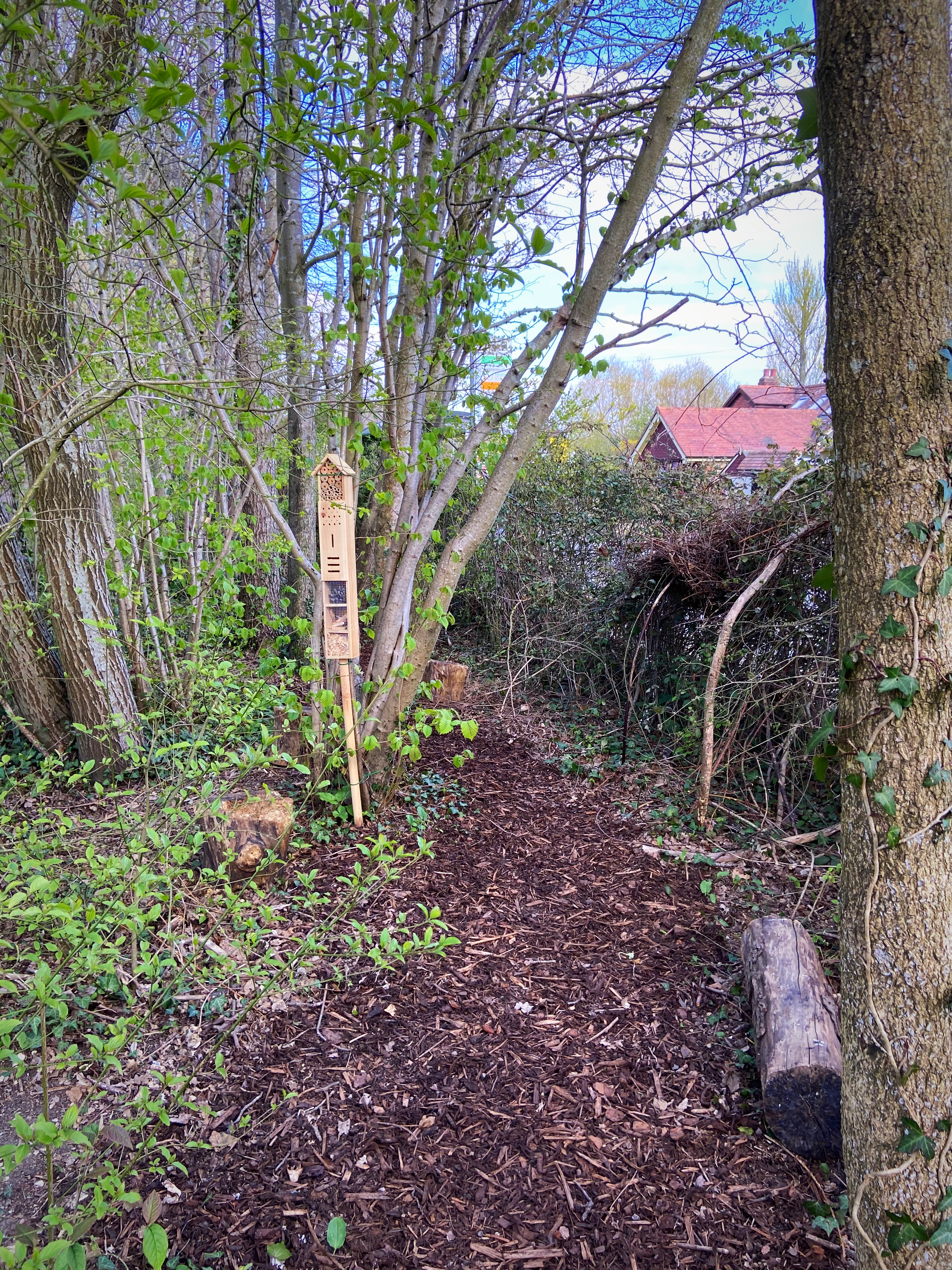 A Woody Walk has been created on the school grounds to allow children to surround themselves with nature and realise how to appreciate and respect it
